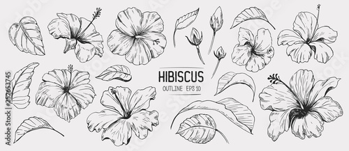 Hibiscus flower. Set of hand drawn illustration. Vector outline. Isolated #252653745