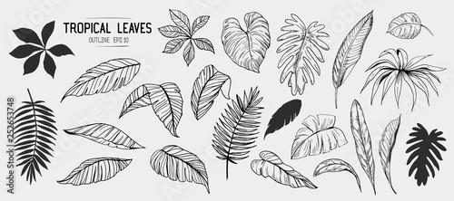 Obraz Tropical leaves. Set of hand drawn illustration. Vector. Isolated - fototapety do salonu