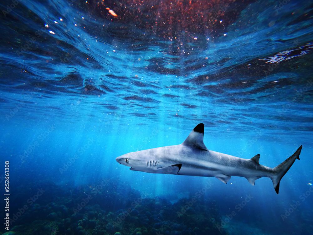 Fototapeta Blacktip reef shark swiming in deep blue sea with light rays underwater