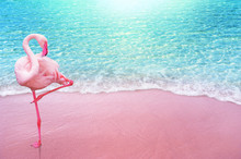 Pink Flamingo Bird Sandy Beach...