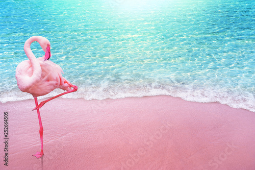 Garden Poster Flamingo pink flamingo bird sandy beach and soft blue ocean wave summer concept background