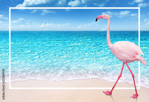 flamingo on sandy beach and soft blue ocean wave summer concept background