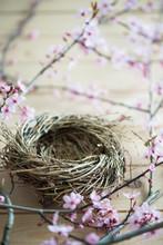 Empty Bird Nest With The Pink, Litte Flower Of Japanese Plum Tree