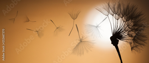 flying dandelion seeds on a sunset background