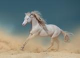 Palomino pony in dust running