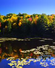 Autumn Landscape. Fall Foliage And Lily Pads Reflected On Water