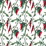Seamless watercolor realistic botanical pattern of hot red pepper blooming - 252689775