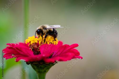 Bee on flower 5