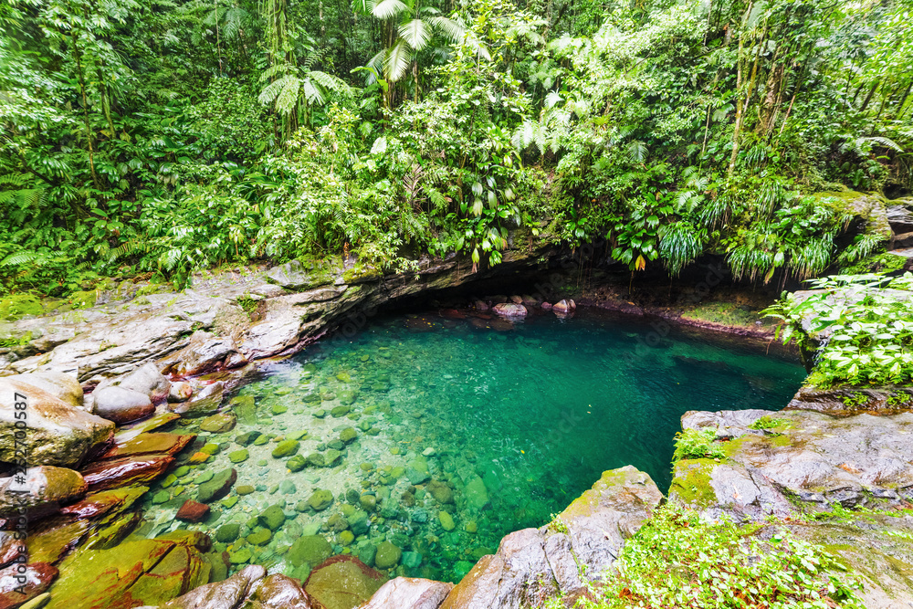Fototapety, obrazy: Bassin Paradise pond in Basse Terre jungle in Guadeloupe