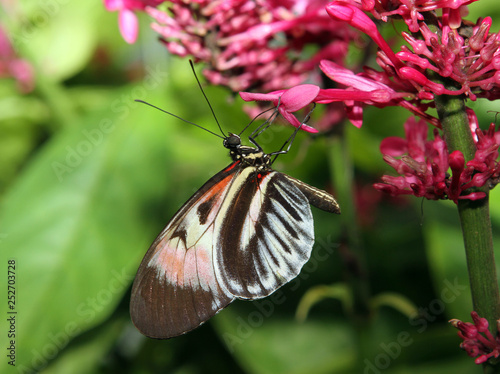 Butterfly hanging on a pink flower