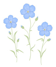 Flax Flowers Isolated On A White Background. Three Blue Flowers With Green Leaves. Summer Plants. Vector Illustration