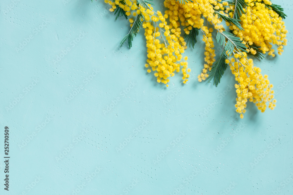 Fototapety, obrazy: Blue background with mimosa branch for spring holidays