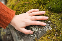 Human Hand Touching Moss And L...
