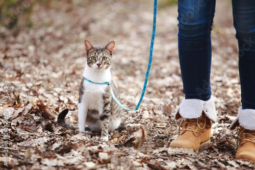 Foto  Woman walking cat on a leash outdoors in nature