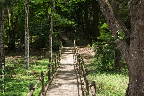 Photo  Horto Florestal