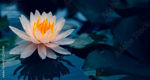 Photo  Lotus flower in pond.