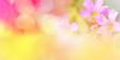 Leinwandbild Motiv Nature pink yellow background banner/ abstract colorful blur bokeh autumn bright