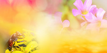 Nature Yellow Background Banner / Abstract Blur Yellow Flower Spring Bright Summer