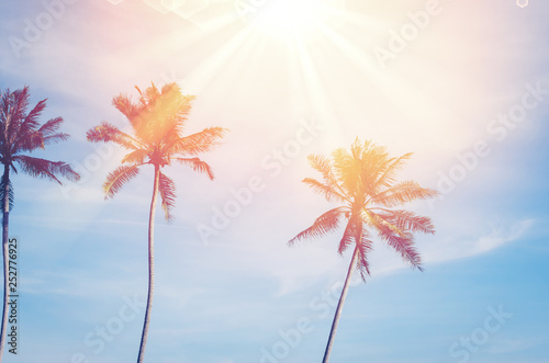 Canvas Prints Palm tree Copy space of tropical palm tree with sun light on sky background.