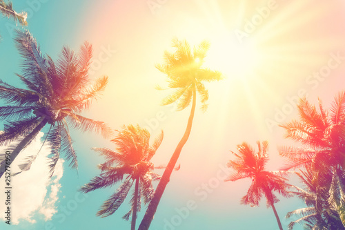 Fotografia Copy space of tropical palm tree with sun light on sky background