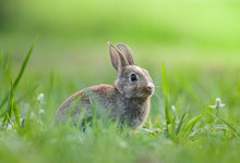 Cute Rabbit Sitting On Green F...