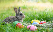 Easter Bunny And Easter Eggs On Green Grass Outdoor / Colorful Eggs In The Nest And Little Rabbit
