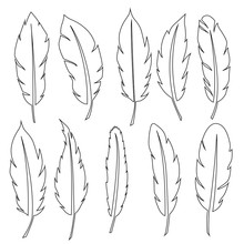 Set Of Feathers. Vector Design...