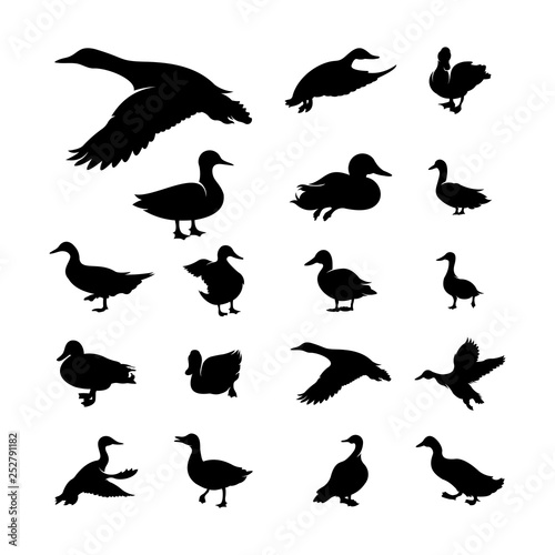 Set of Duck Silhouette collection vector illustration Wall mural