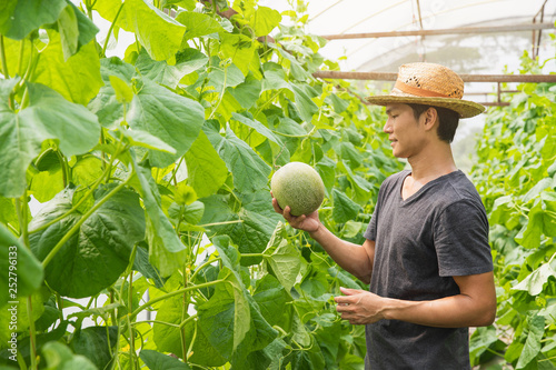 Melons in the garden, Yong man holding melon in greenhouse melon farm Wallpaper Mural