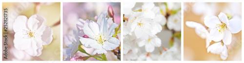 Keuken foto achterwand Kersenbloesem Cherry blossom collage