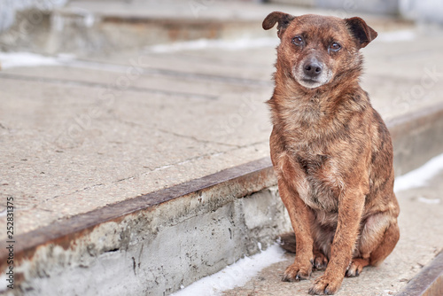 Fotografia Unhappy stray dog with sad eyes on a city street