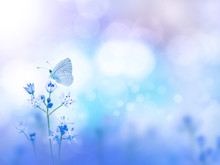 Butterfly And Purple Flowers Blurred Background