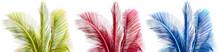 Palmes Cou Fond Blanc