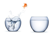 Gold Fish Change Move Career O...