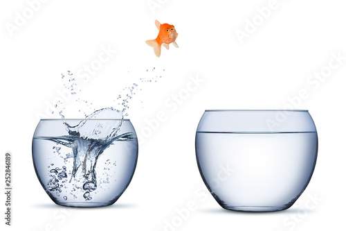 Fotografía gold fish change move career opportunity rise concept jump into other bigger bow