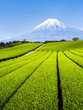 canvas print picture - Berg Fuji und grüne Teefelder in Shizuoka, Japan