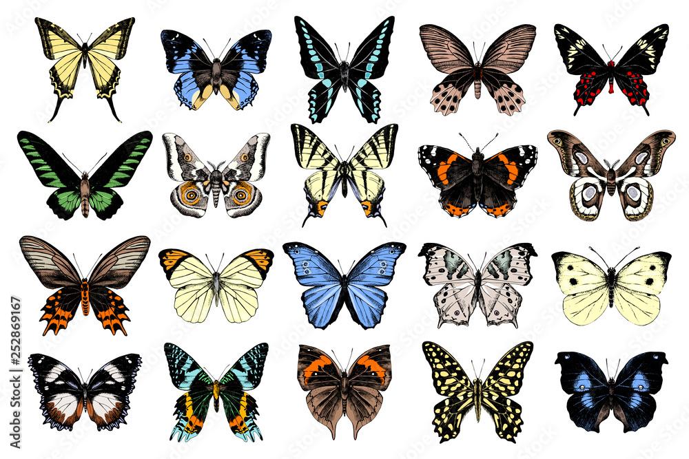 Fototapeta Hand drawn butterflies collection