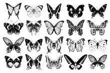 Hand Drawn Butterflies Collect...