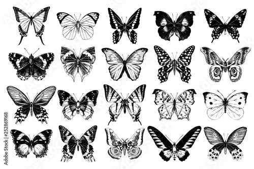 Hand drawn butterflies collection