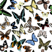 Seamless Pattern With Hand Drawn Butterflies