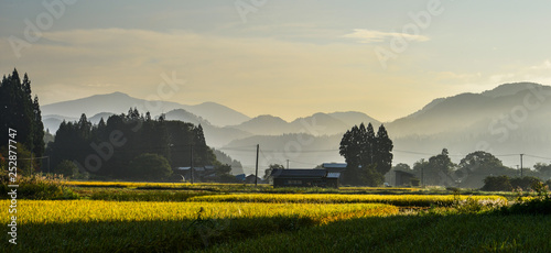 Cadres-photo bureau Miel Beautiful rice field in Akita, Japan