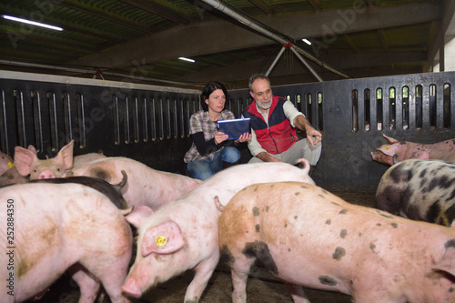 Foto couple of farmers with a digital tablet on a pig farm