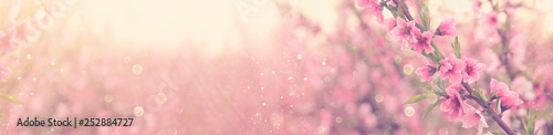 Photo abstract and dreamy banner background of of spring blossoms tree with pink flowers
