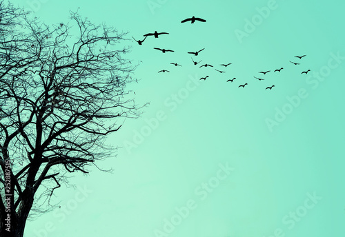 In de dag Groene koraal The silhouette of the tree and a flock of birds on a turquoise background.