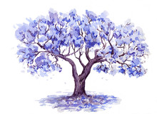 The Jacaranda Trees. Hand Draw...
