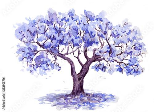 drzewa-jacaranda-wyciagnac-reke