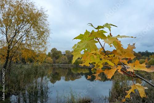 Foto auf Gartenposter Fluss Autumn leaves