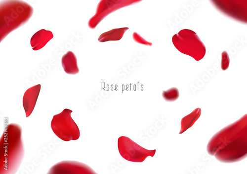 3d realistic isolated red rose petals circling in a whirlwind