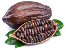 Cocoa Pods And Cocoa Beans - C...