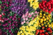Tulips Close Up. Tulip Spring Market. Tulips. Many Tulips Of Different Color.